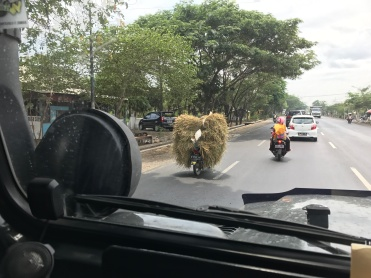 We couldn't see the motorbike driver for the huge mound of grass